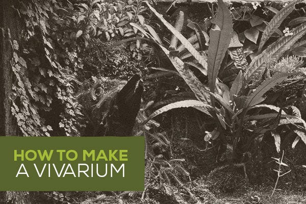 How to Make a Vivarium