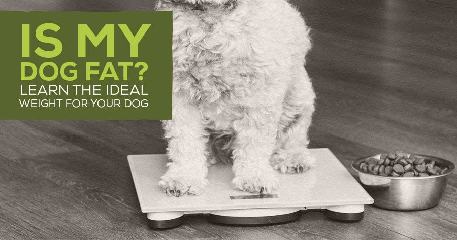 Is My Dog Fat? Learning the Ideal Weight For Your Dog