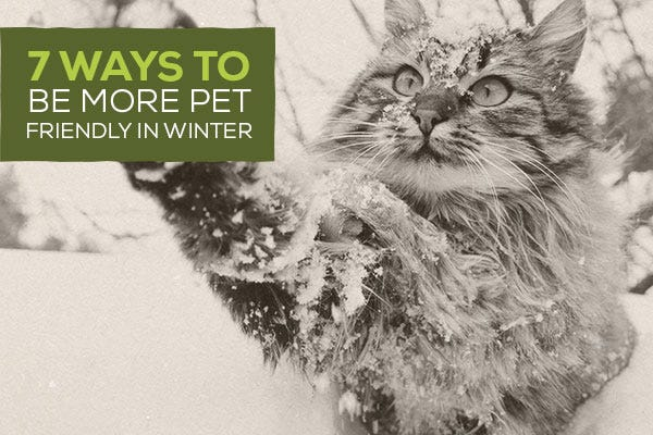 7 Ways To Be More Pet Friendly in Winter