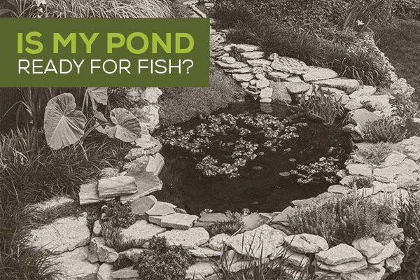 Is My Pond Ready for Fish?