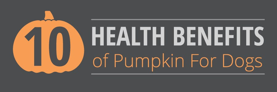 10 Health Benefits of Pumpkin for Dogs