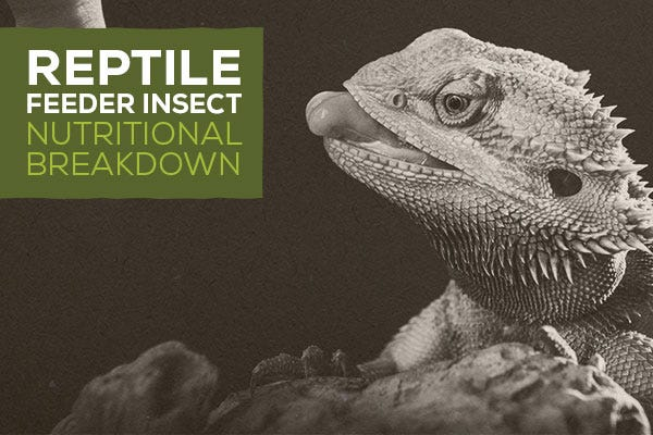 Reptile Feeder Insect Nutritional Breakdown