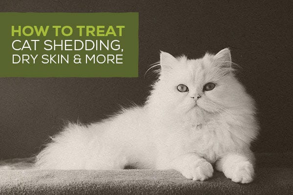 How To Treat Cat Shedding, Dry Skin, and More