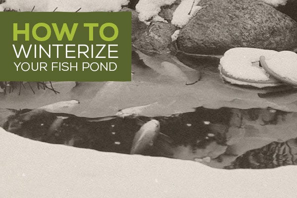 How to Winterize Your Fish Pond [Video]