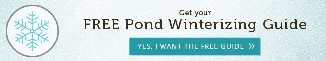 Free Pond Winterization Guide