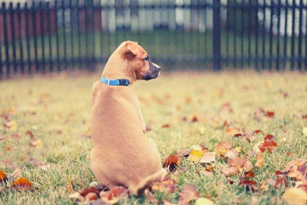 Dog Sitting in Yard