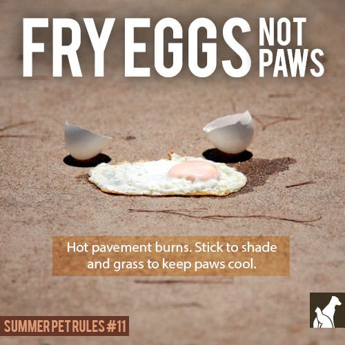 Fry Eggs, Not Paws