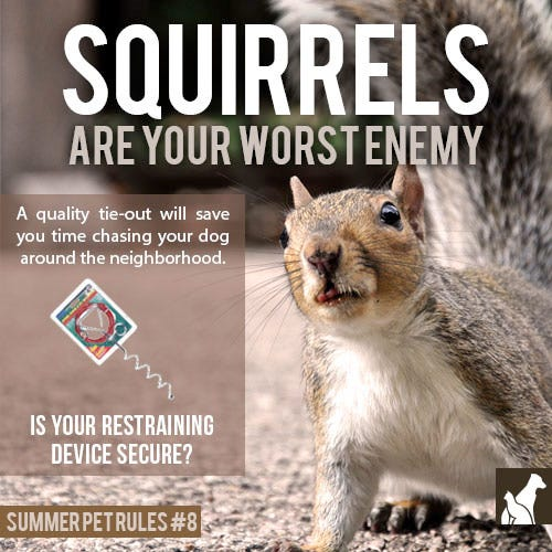 Squirrels are Your Worst Enemy