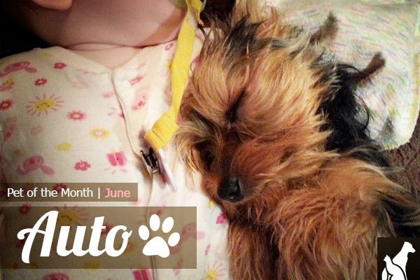 Pet of the Month - Auto