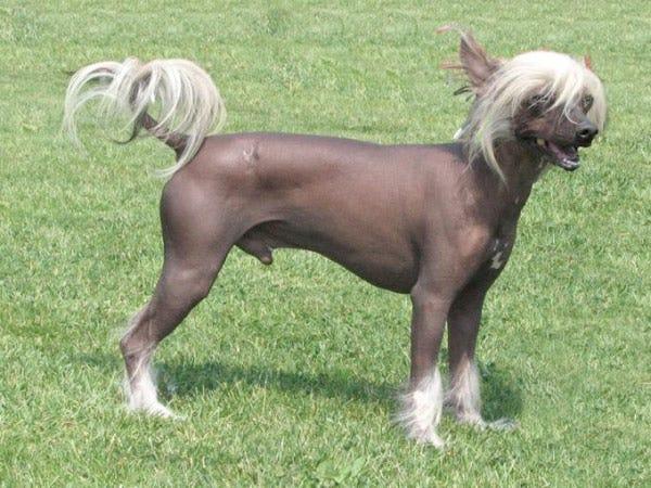 ... Alive Pets - 15 Weirdest Dog Breeds We Love Unique Looking Dog Breeds Unique Looking Dog Breeds