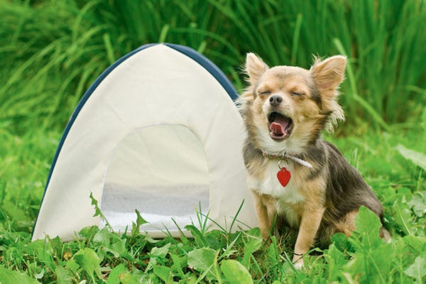Dog Tent for Camping
