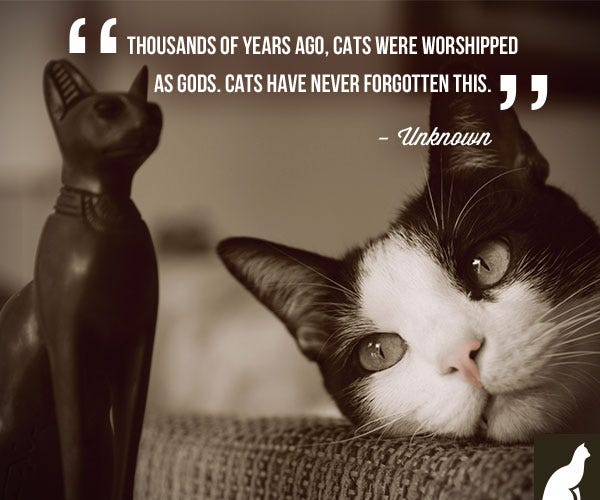 Cat Worshipped as gods quote