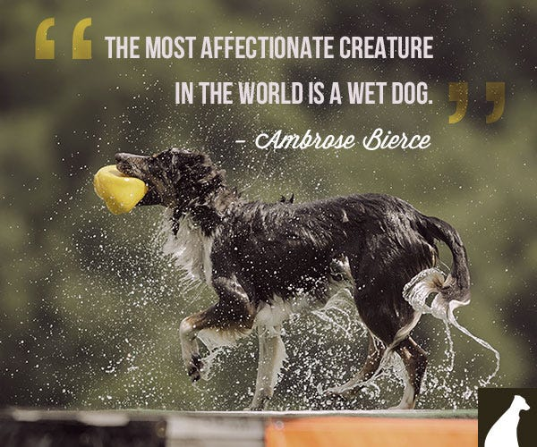 funny wet dog quote