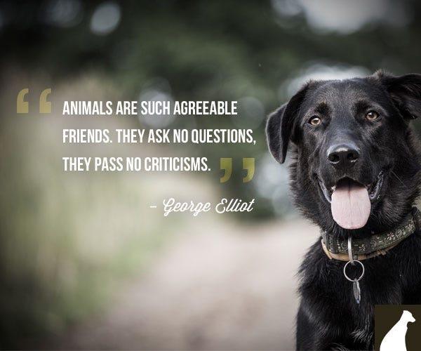 George Elliot dog quote