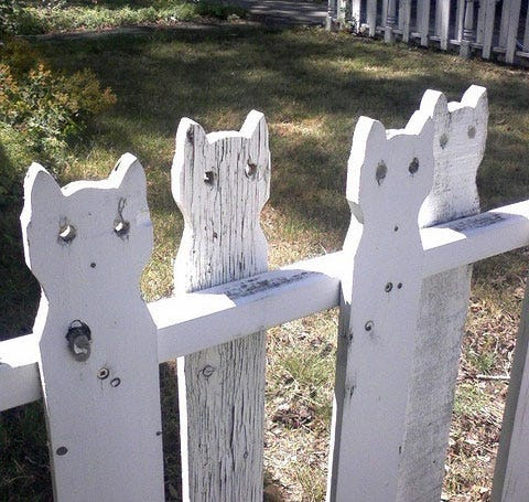 Cat Picket Fence