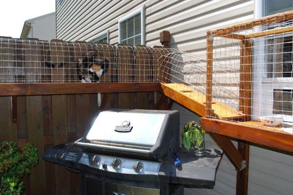 Fence-Top Cat Walk
