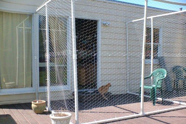 catio-cat-backyard