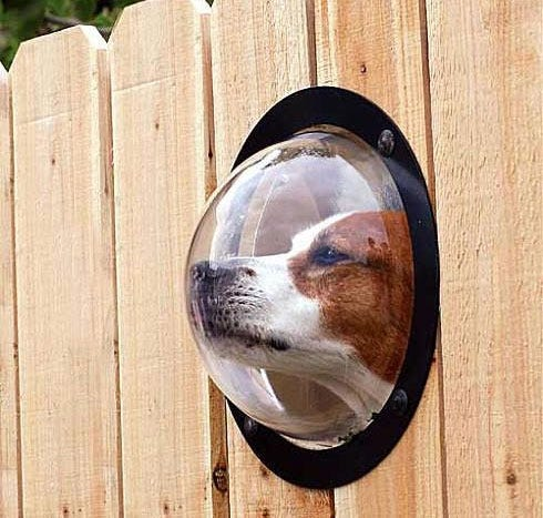 dog-peep-hole-fence-backyard