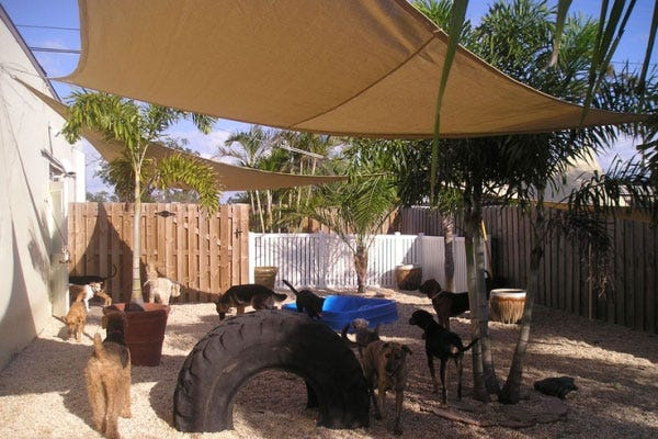 Dog Backyard Playground Ideas : Blog  7 Extreme Dog & Cat DIY Projects for Your Backyard