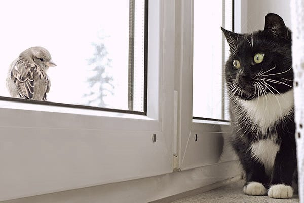 cat-stocking-prey