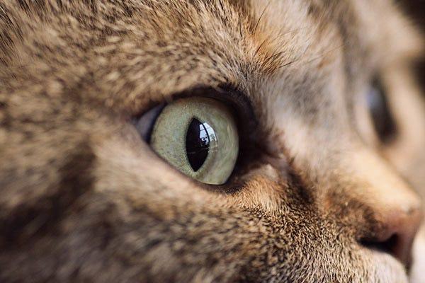 cat-vision