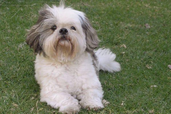 Dog Breed Doesn T Bark