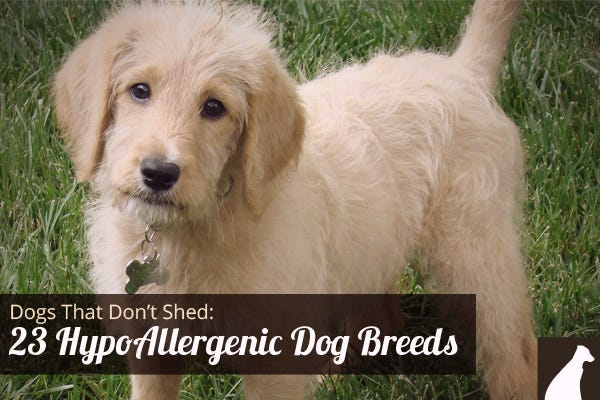 Nothing found for Dog Breeds That Dont Shed Medium 3