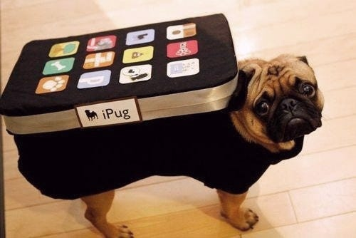 IPad Dog Costume