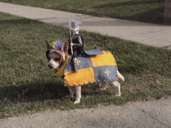Knight Dog Costume