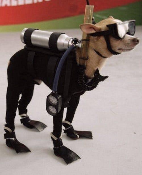 scuba-dog-costume