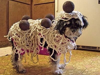 20 funny creative outrageous pet costumes spaghetti and meatballs dog costume solutioingenieria Choice Image