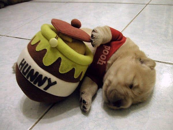 winnie-the-pooh-puppy-costume