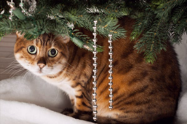 Decorating Hazards for Pets - Christmas Tree