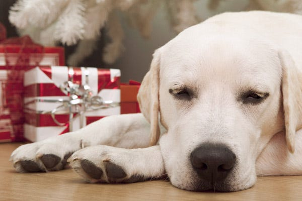 Decorating Hazards for Pets - Presents