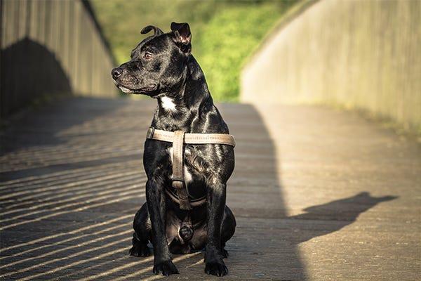 Dog with a shiny coat