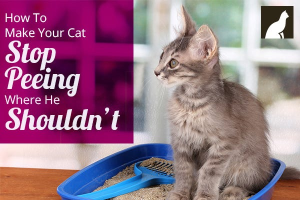 how to make your cat stop peeing everywhere