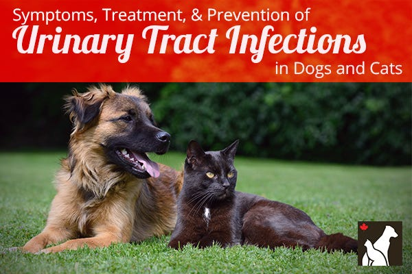 Urinary Tract Infection: Symptoms, Diagnosis, and Treatment