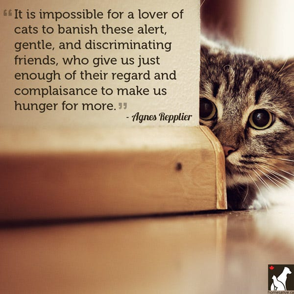 Agnes Repplier cat quote