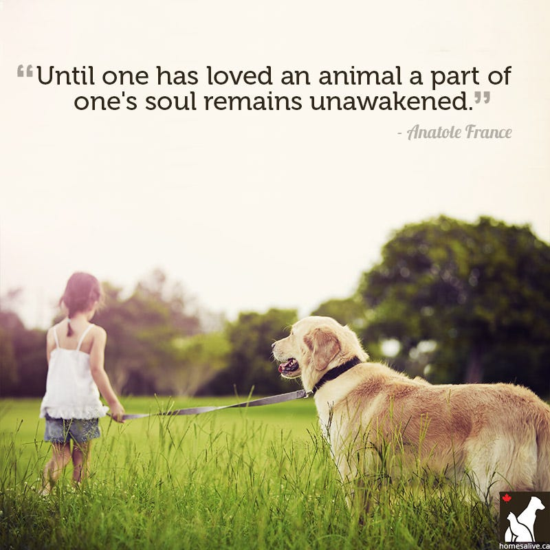 and Tips Homes Alive Pets 11 Quotes for the Love of Dog (or Cat