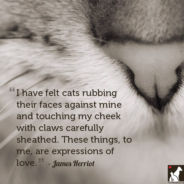 James Herriot cat quote