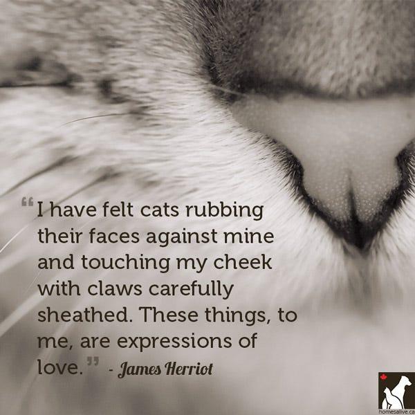 Love Cat Quotes James herriot cat quote