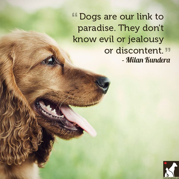 Milan Kundera dog quote