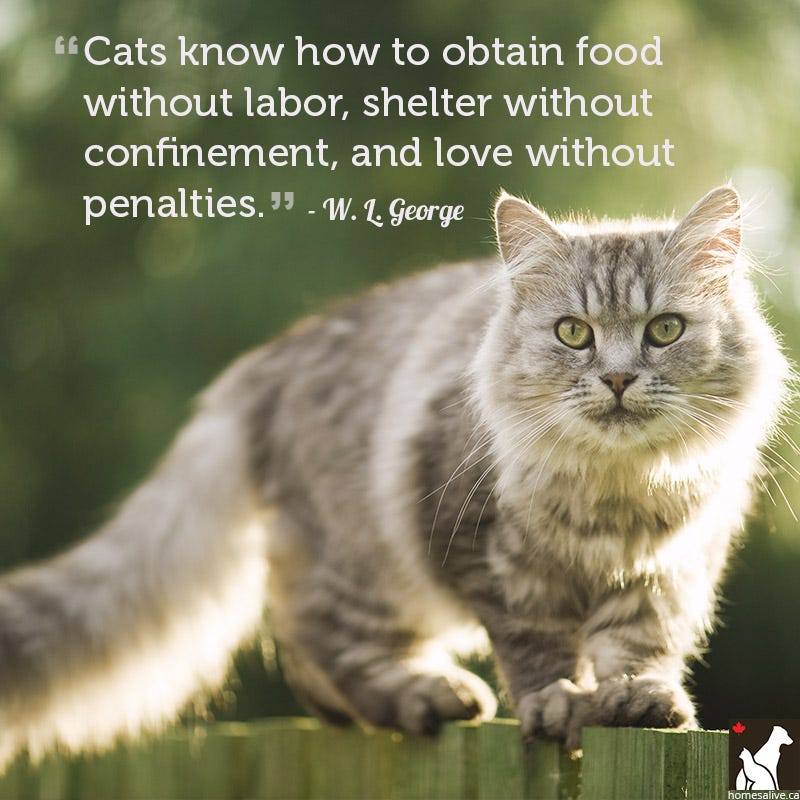 W. L. George cat quote