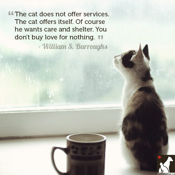 William S. Burroughs cat quote