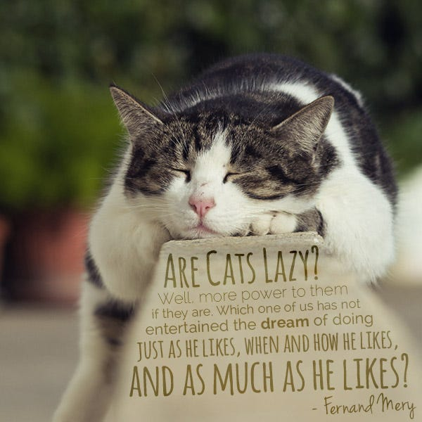 Fernand Mery Cat Quote