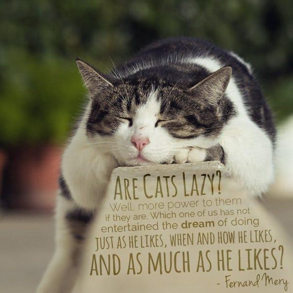 Funny Cat Sayings Quotes: Good Cat Quotes. QuotesGram