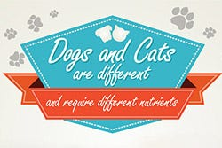 Dogs and Cats are Need Different Nutrients