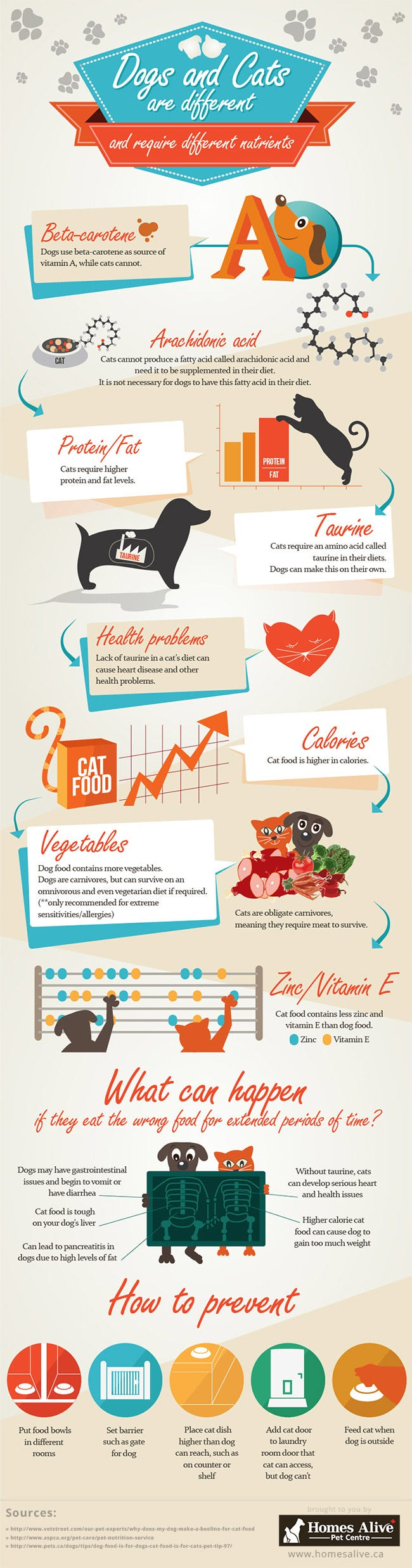 Differences Between Dog and Cat Food Infographic