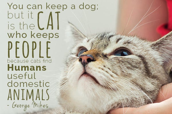 George Mikes Cat Quote