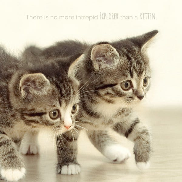 Kittens Exploring